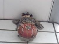 ソフトバンクの非常用ライトの上に作られた燕の巣
