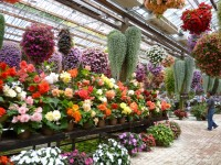 温室ではベゴニアなどが鮮やかです。