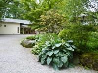 東山旧岸邸玄関和前のギボウシ