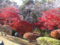 富士ビューホテル庭園の紅葉
