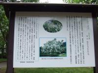 ヒトツタバコ(なんじゃもんじゃ)の由来掲載の看板