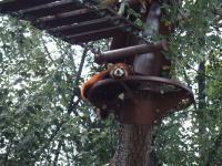 レッサーパンダが樹上からコンニチハ