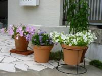 玄関先の花たち1