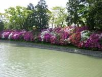 駿府城公園中堀のツツジ