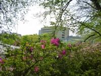 駿府城公園ツツジ土手からシズウエルを見る